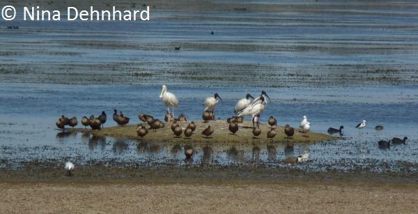 LakeXX_birding